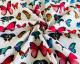 Little Johnny - Bright Butterflies Cotton