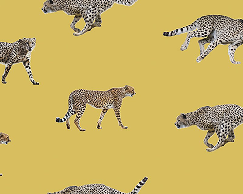 The Little Johnny Range Digital Cottons Cheetahs