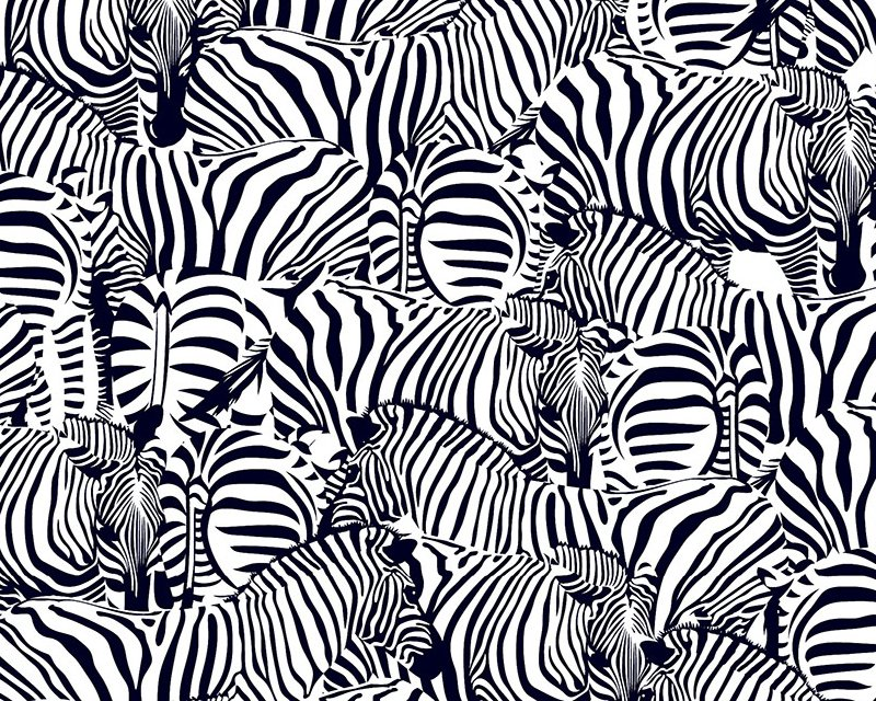 Little Johnny -  Zebras Digital Cotton